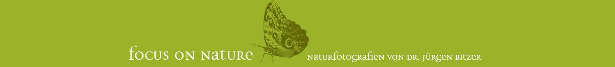Focus-on-nature