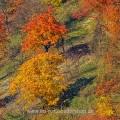 Ötlinger Halde im Herbst, Ötlingen, Kirchheim/Teck