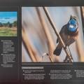 Kalender 2014 von Popp-Hackner