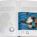 Vogelbuch - Die Vögel in Hessen, Tafelente