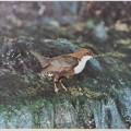 Wir und die Vögel 1982