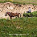Pferdefuhrwerk, Rumänien