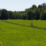 Oestland