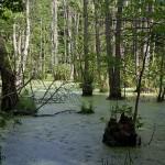 Jasmund Nationalpark