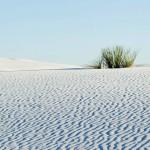 White Sands Gipswüste mit Soap Tree Yucca