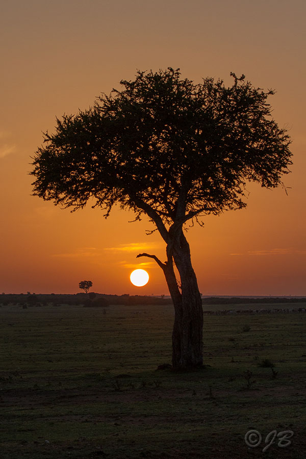 Abend in der Masai Mara