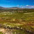 Furusjoensee, Rondane NP Norwegen