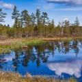 Uriges Hochmoor in Schweden