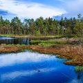 Uriges Hochmoor in Schweden (9 Bilder Hochformat)