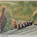 Tierpark Nr. 6 1976, erste Veröffentlichung
