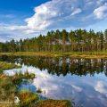 Hochmoor in Schweden