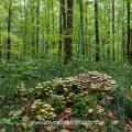 Pilze im Wald an morschem Baumstamm