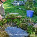Hintergrundgestaltung am Vogelbad