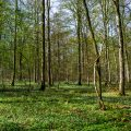 Frühlingswald im Talwald, Kirchheim/Teck