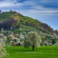 Streuobstwiesen bei an der Limburg bei Weilheim an der Teck
