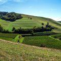 Panorama über Haselschacher Buck, Vogstburg und Badberg (rechts)