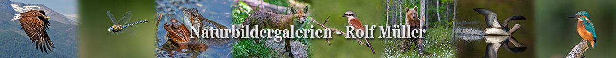 Naturfotografie – Rolf Müller