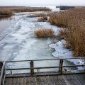 Federseelandschaft im Winter