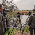 Fotolocation bei den Purpurreihern, Wagbachniederung