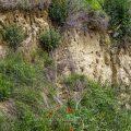 Brutbiotop vom Bienenfresser (Merops apiaster)