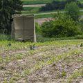 Ansitz im Tarnzelt bei Bienenfresser (Merops apiaster)