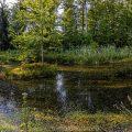 Kleiner See im Wald (Einreihiges Panorama mit 7 Bildern)