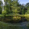 Kleiner See im Wald (Einreihiges Panorama mit 6 Bildern)