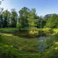 Kleiner See im Wald (Panorama mit 3 Reihen und 15 Bildern)