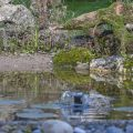 Teich im Garten, Location für badende Vögel
