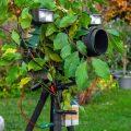 Blitzhalterung am Stativ mit Kamera und Blitzen. Getarnt mit Camouflagestoff und zusätzlichen Blättern