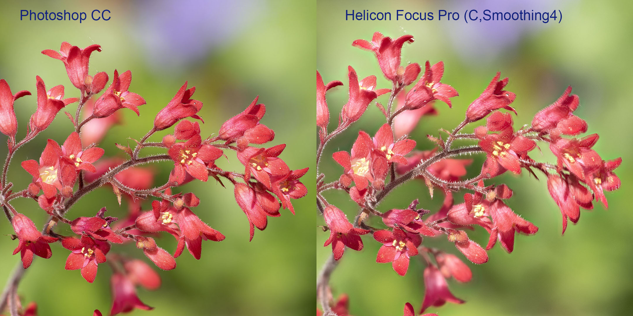 Vergleich Photoshop-Helicon Focus Pro