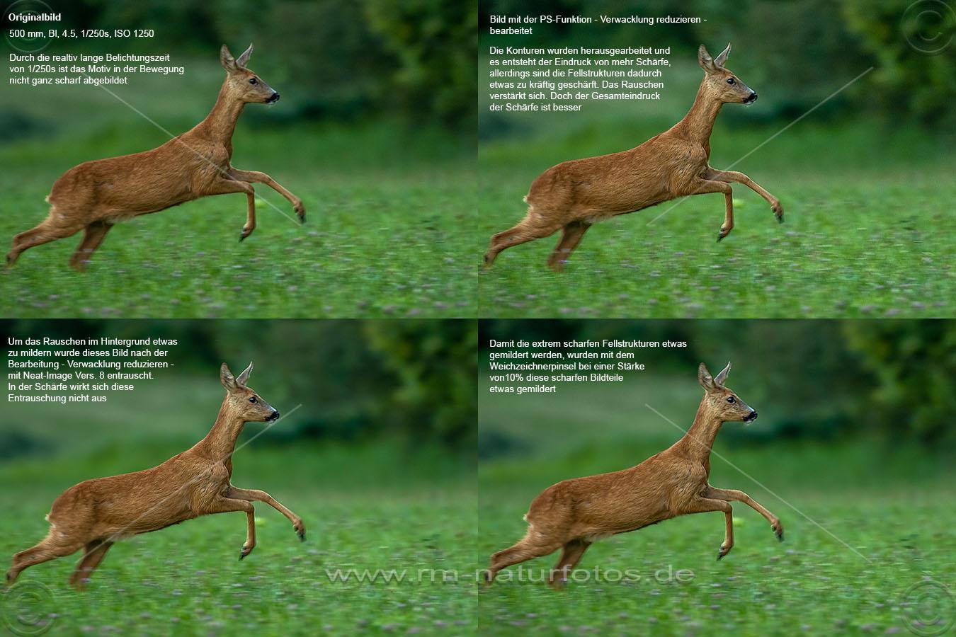 Reh (Capreolus capreolus) in Bewegung, Bildvergleich mit verschiedenen Arbeitsschritten