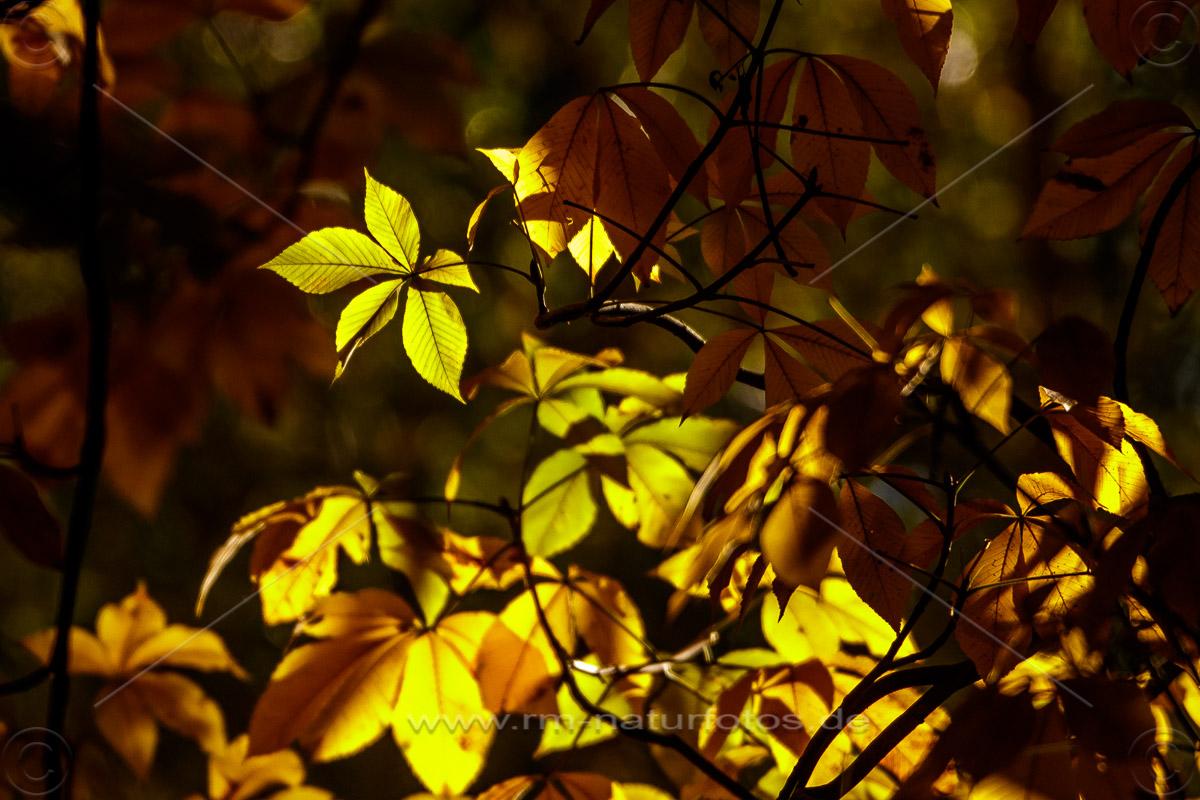 Herbststimmung im Hohenheimer Exotenpark