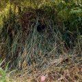 Festes Versteck für Eisvogelfotografie