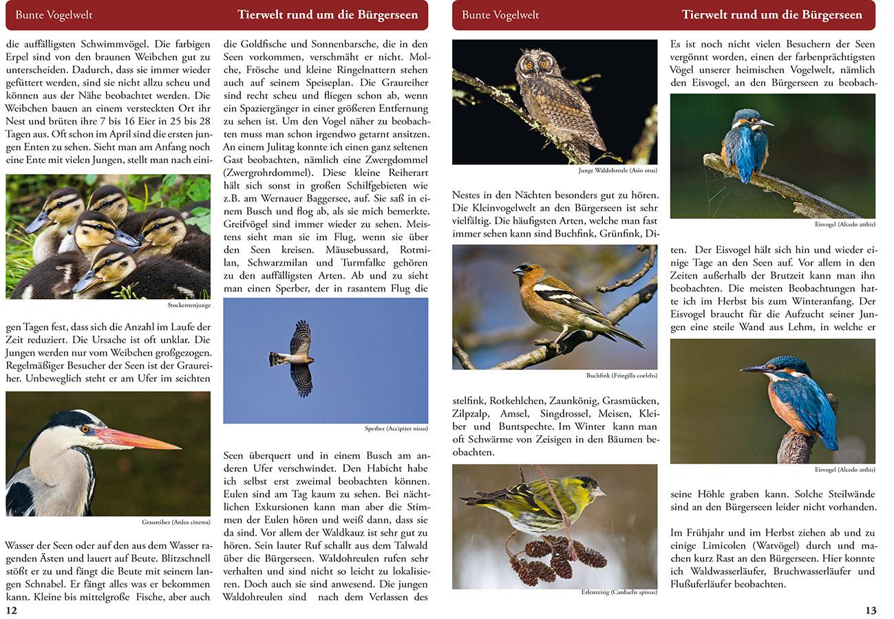Bürgerseebroschüre Seite 12-13