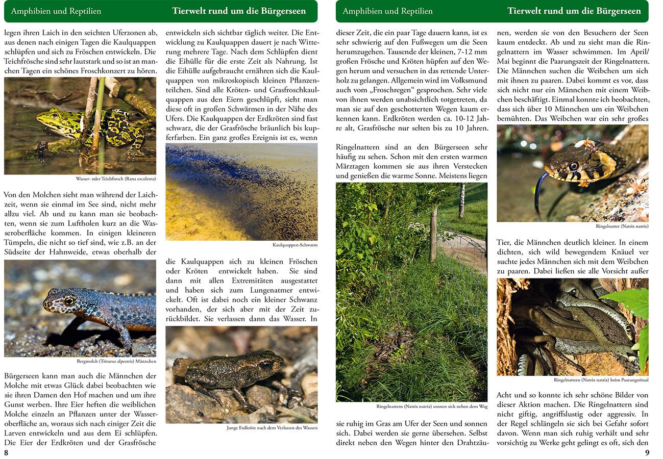 Bürgerseebroschüre Seite 8-9