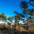 Landschaft bei Nin, Kroatien